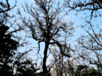 treetangle2a